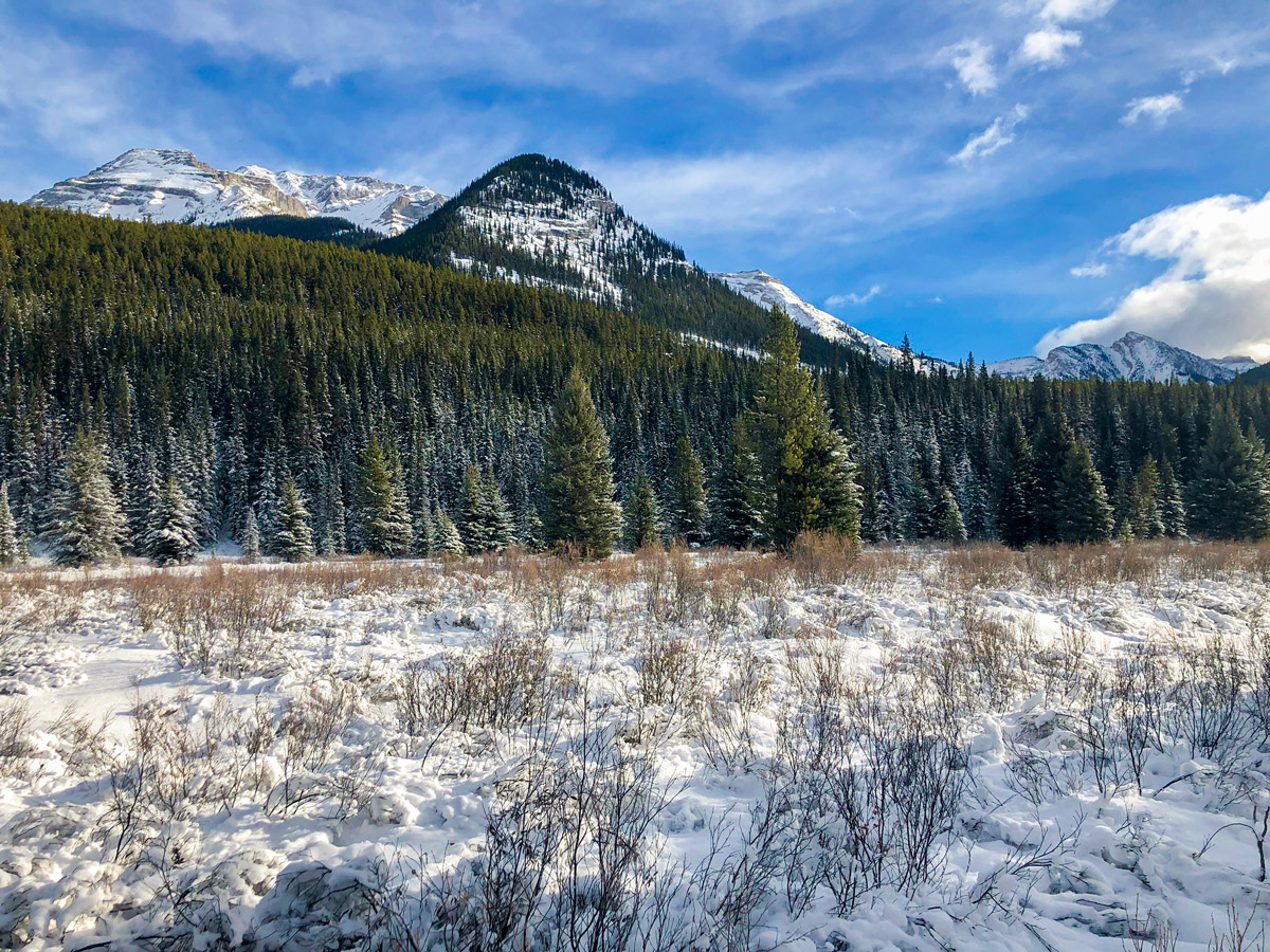 Clearing on Cascade Valley XC ski trail in Lake Louise, Banff National Park