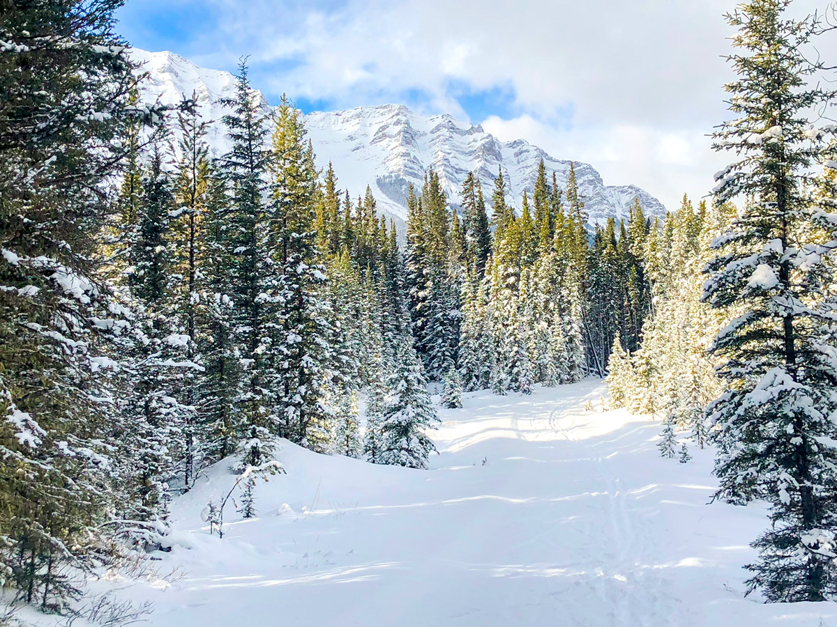 Snowy peaks on Cascade Valley XC ski trail in Lake Louise, Banff National Park