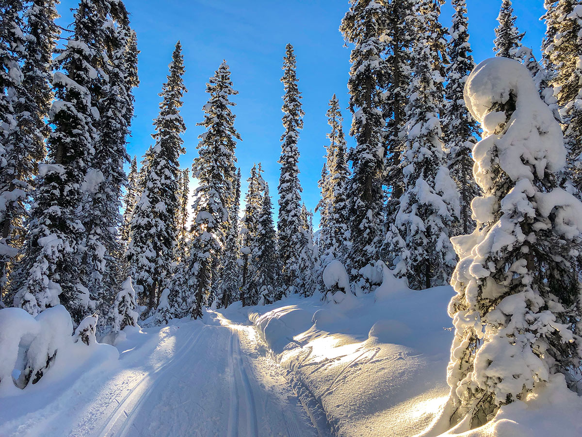 Snow on Fairview Loop XC ski trail in Lake Louise, Banff National Park