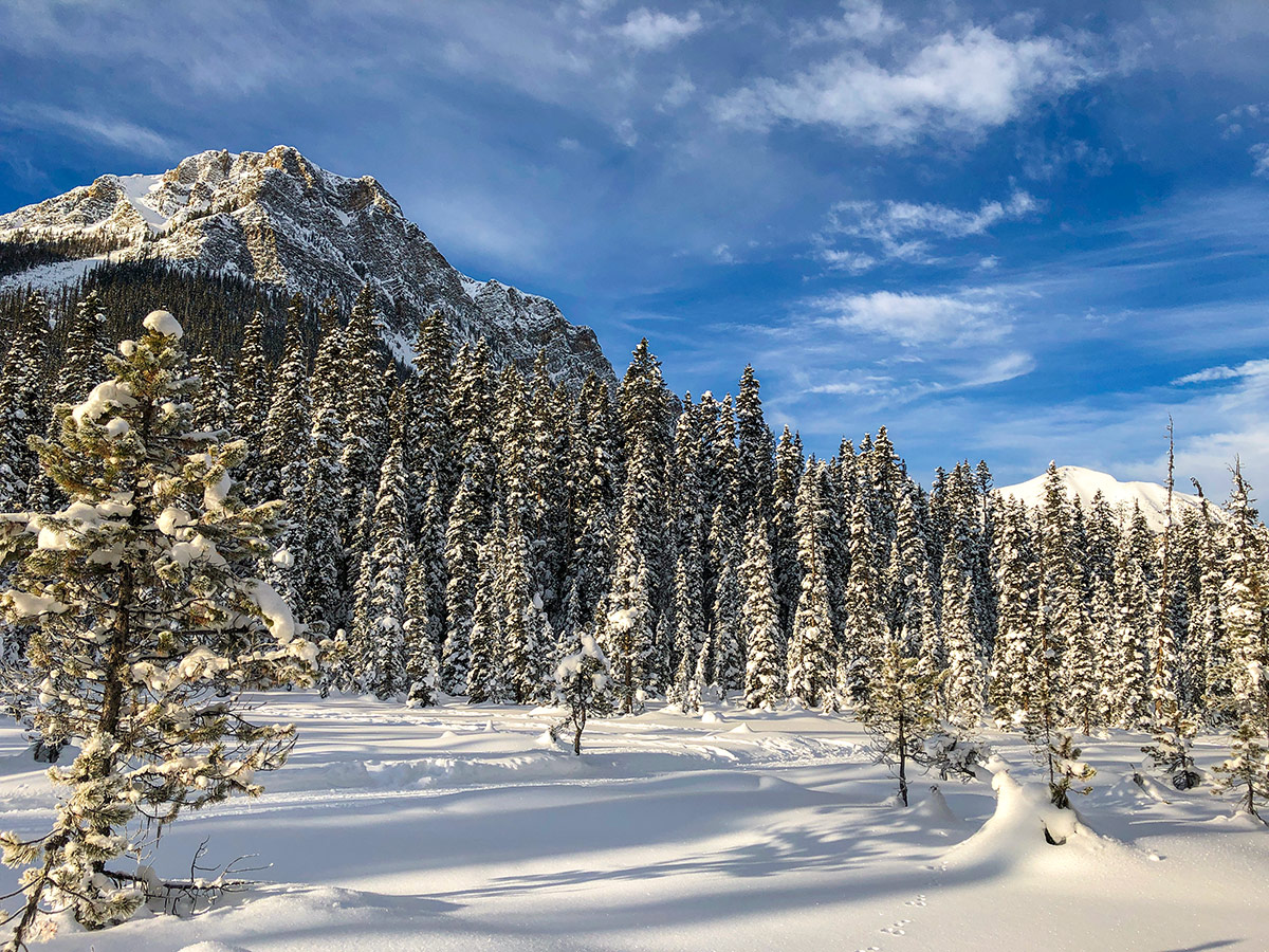 Scenery on Fairview Loop XC ski trail in Lake Louise, Banff National Park