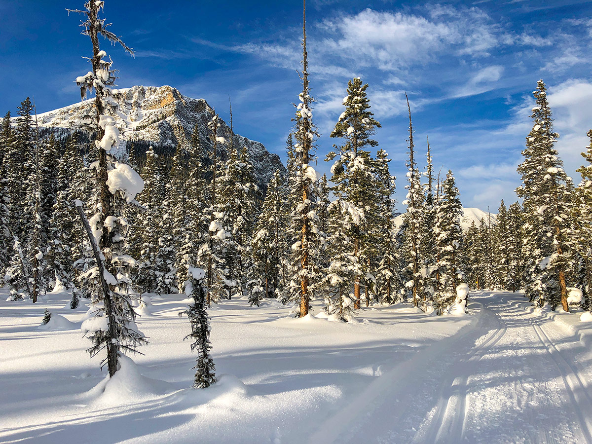 Great conditions on Fairview Loop XC ski trail in Lake Louise, Banff National Park