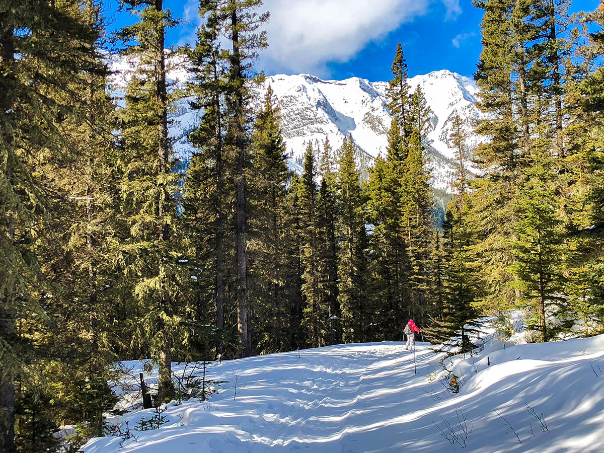 Skiing through the trees on Goat Creek to Banff Springs XC ski trail in Banff National Park