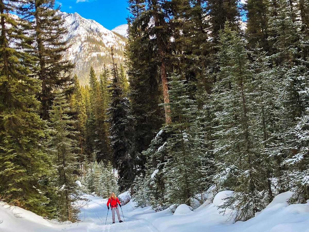 Skiing through the forest on Goat Creek to Banff Springs XC ski trail in Banff National Park