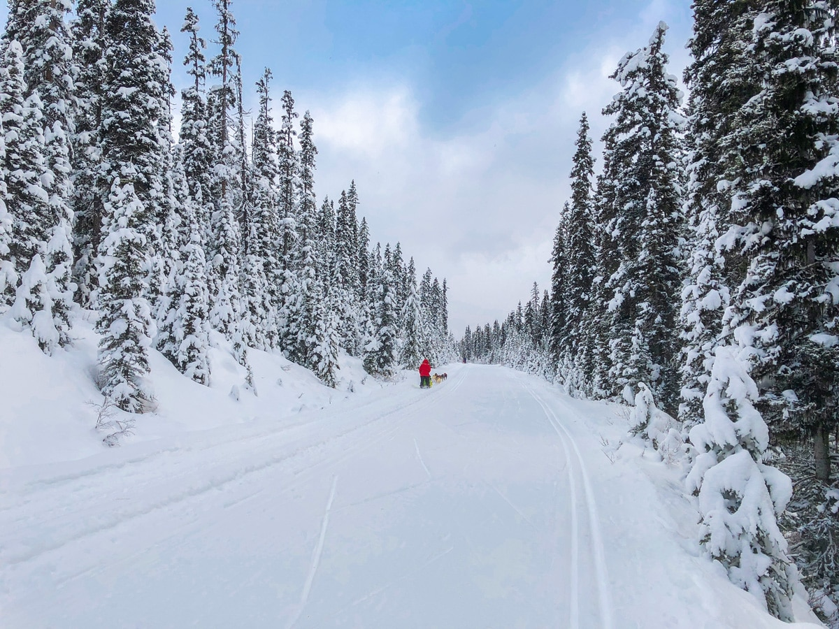Dog Sleds on Great Divide 1A XC ski trail in Lake Louise are a common sight