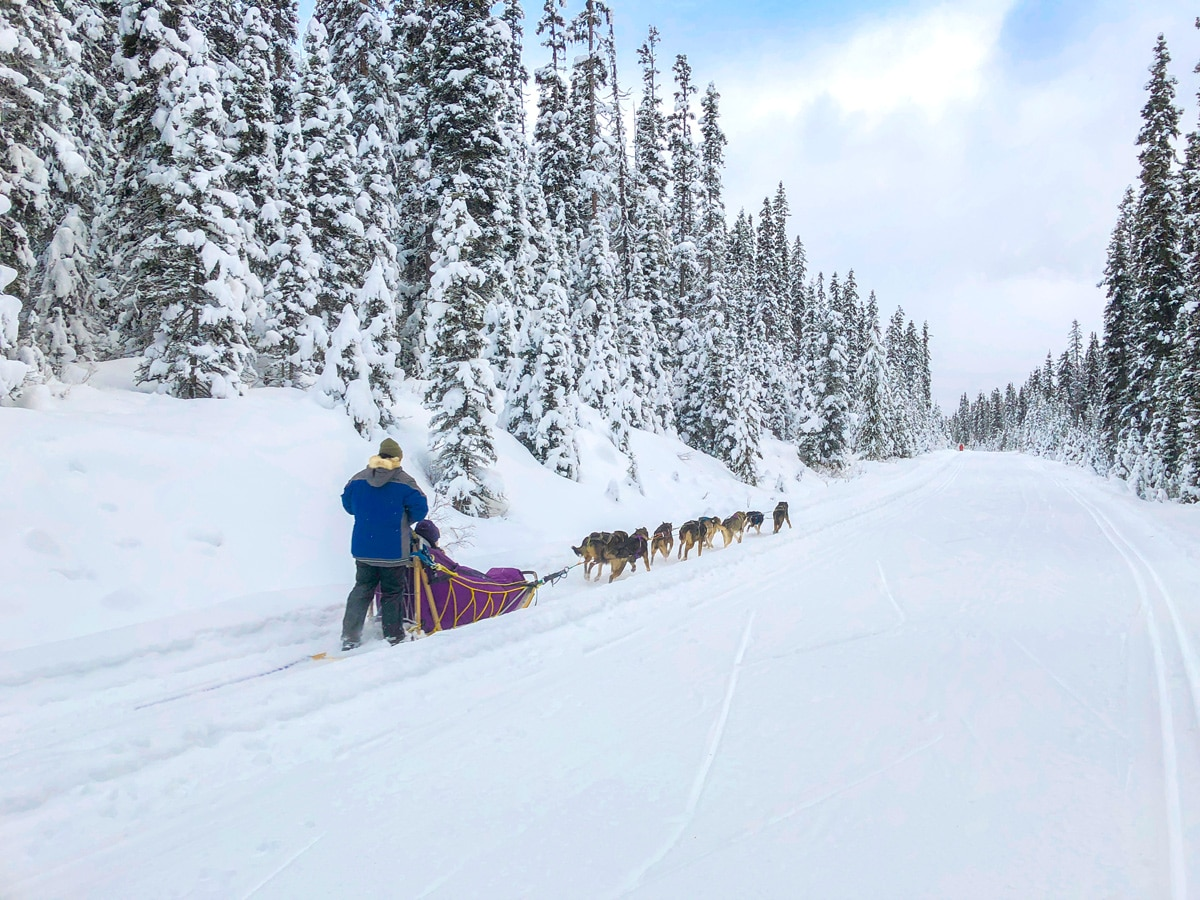 Dog Sleds on Great Divide 1A XC ski trail in Lake Louise, Banff National Park