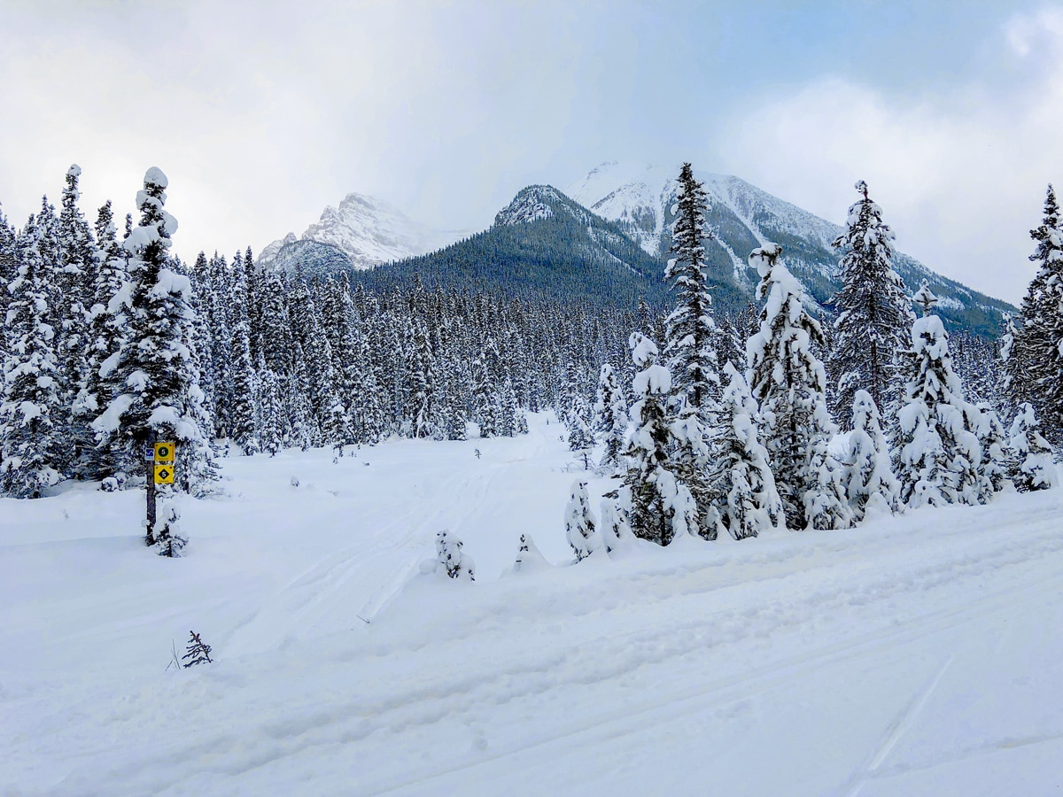 Wonderful view on Great Divide 1A XC ski trail in Lake Louise, Banff National Park