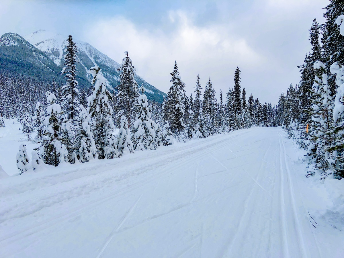 Cloudy day on Great Divide 1A XC ski trail in Lake Louise, Banff National Park
