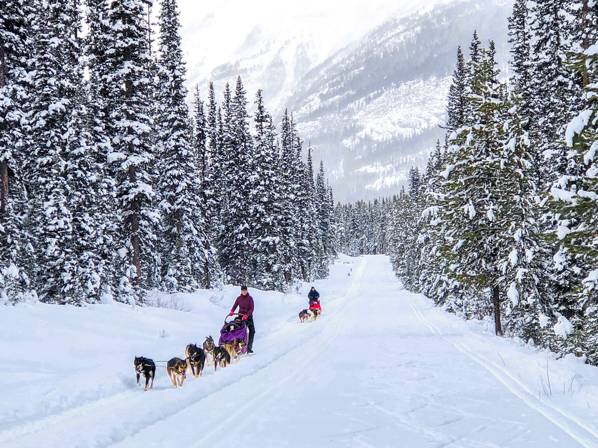 Snowy mountains along Great Divide 1A XC ski trail in Lake Louise, Banff National Park