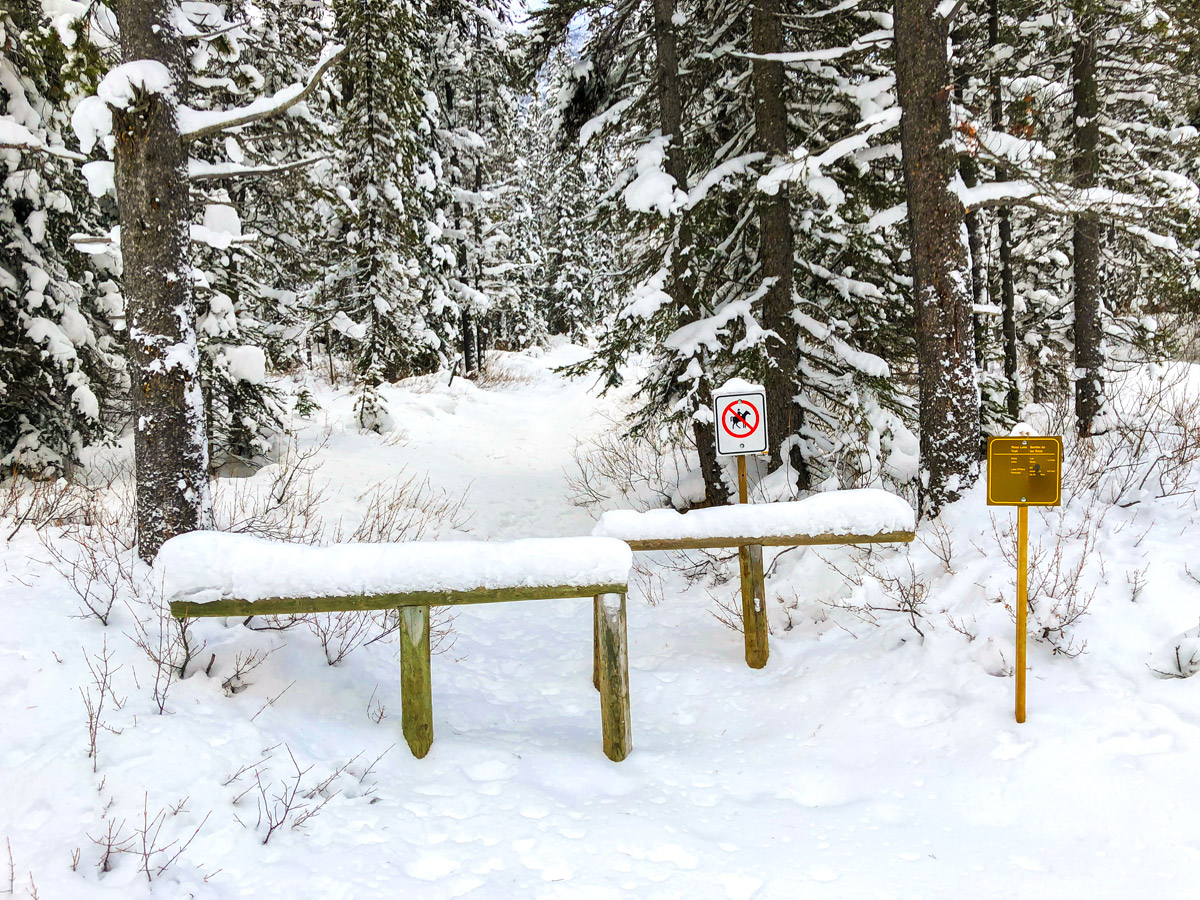 The turnoff for Ross Lakes on Great Divide 1A XC ski trail in Lake Louise, Banff National Park