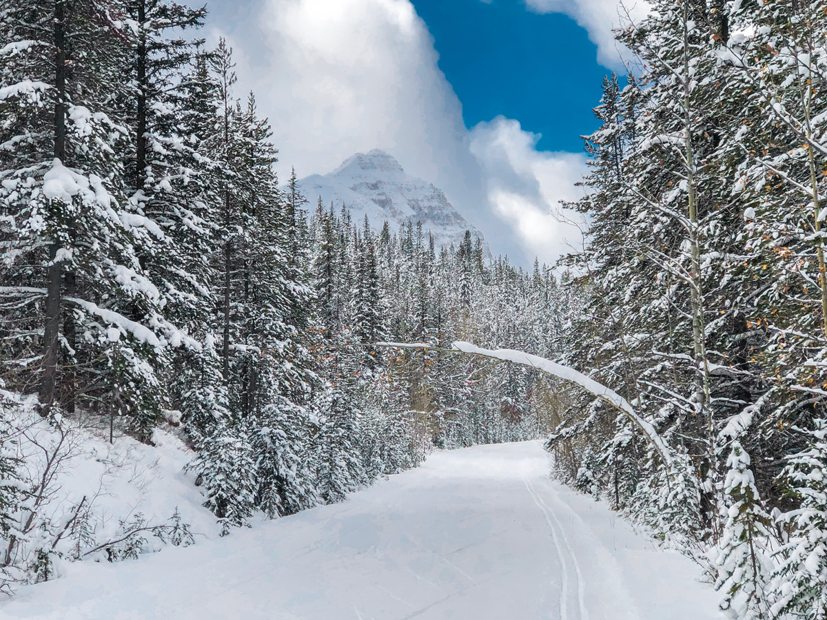 Great Divide 1A XC ski trail in Lake Louise has great views
