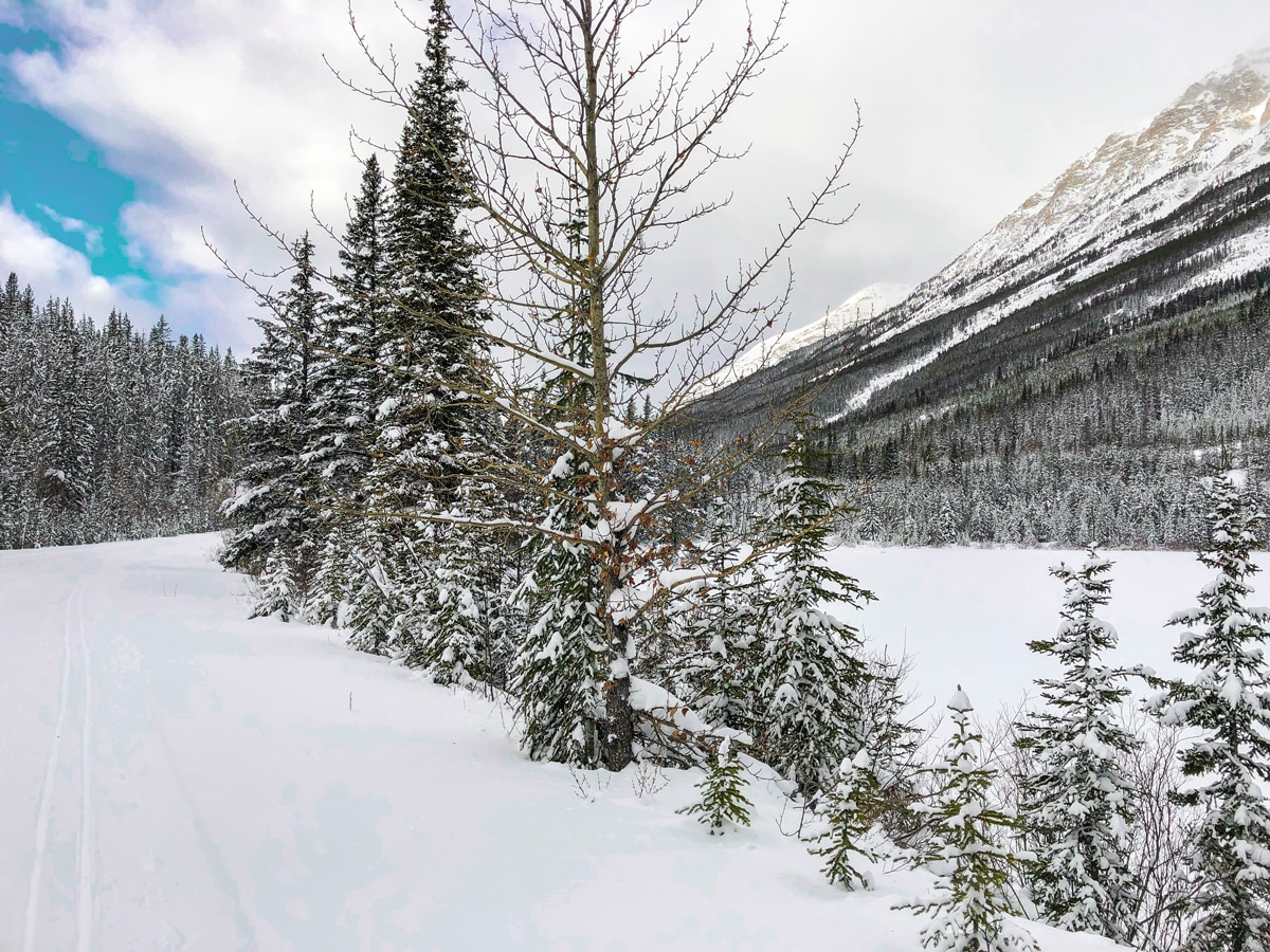 Approaching Lake O'Hara parking lot on Great Divide 1A XC ski trail in Lake Louise, Banff National Park