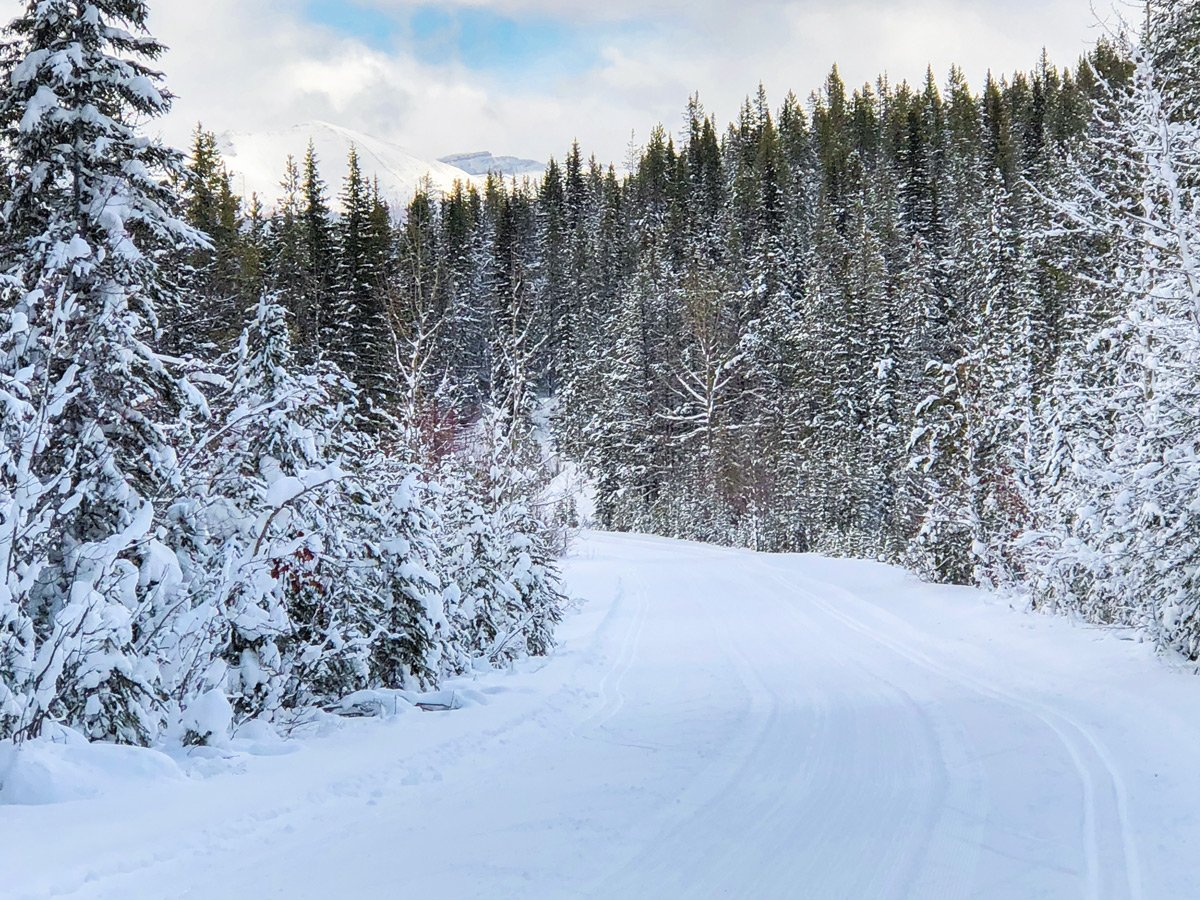 Snow on Great Divide 1A XC ski trail in Lake Louise, Banff National Park