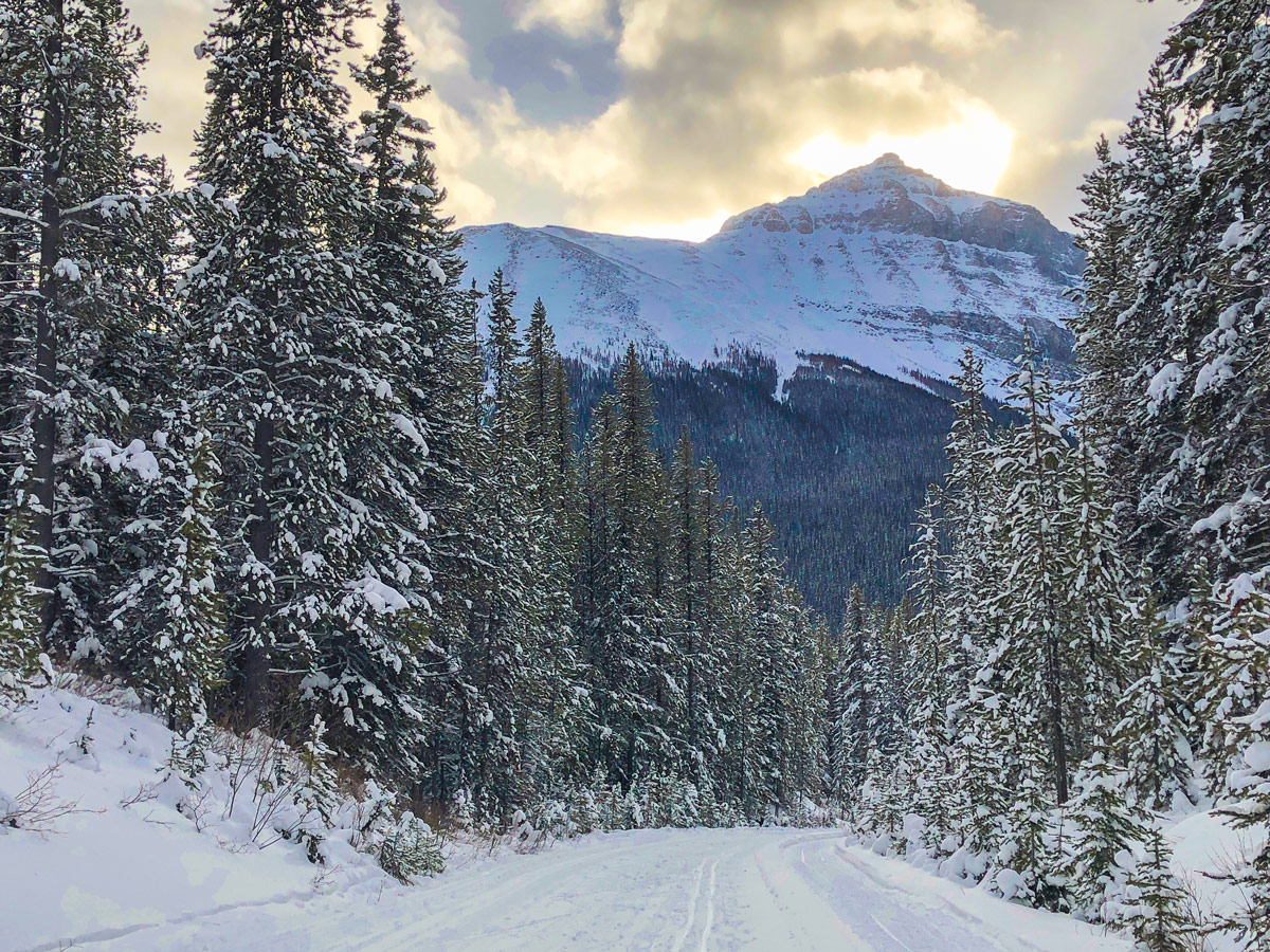 Views on Great Divide 1A XC ski trail in Lake Louise, Banff National Park