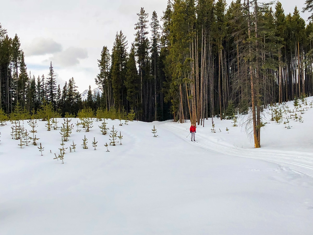 Downhill part of Pipestone Loop XC ski trail in Lake Louise, Banff National Park