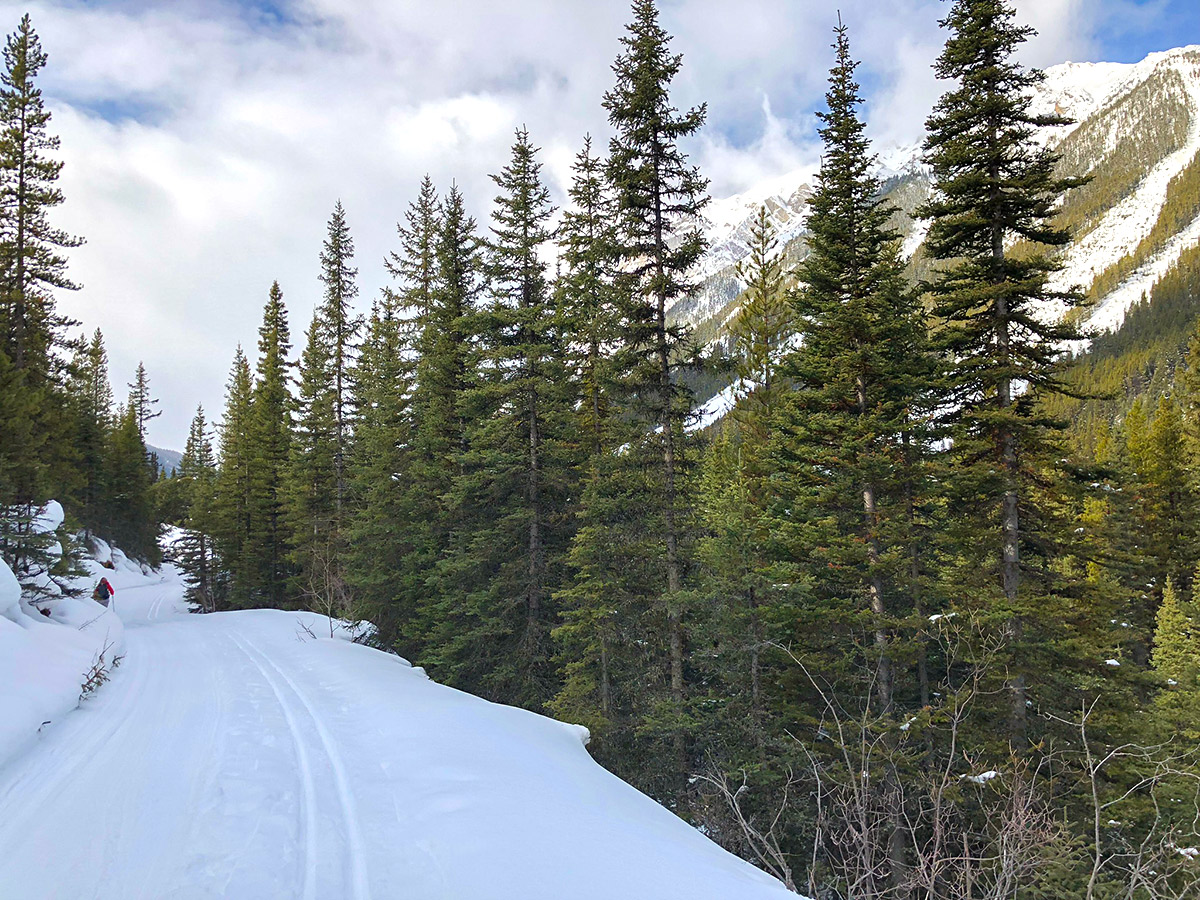 Skiing upon Redearth Creek XC ski trail from Lake Louise, Banff National Park, Alberta