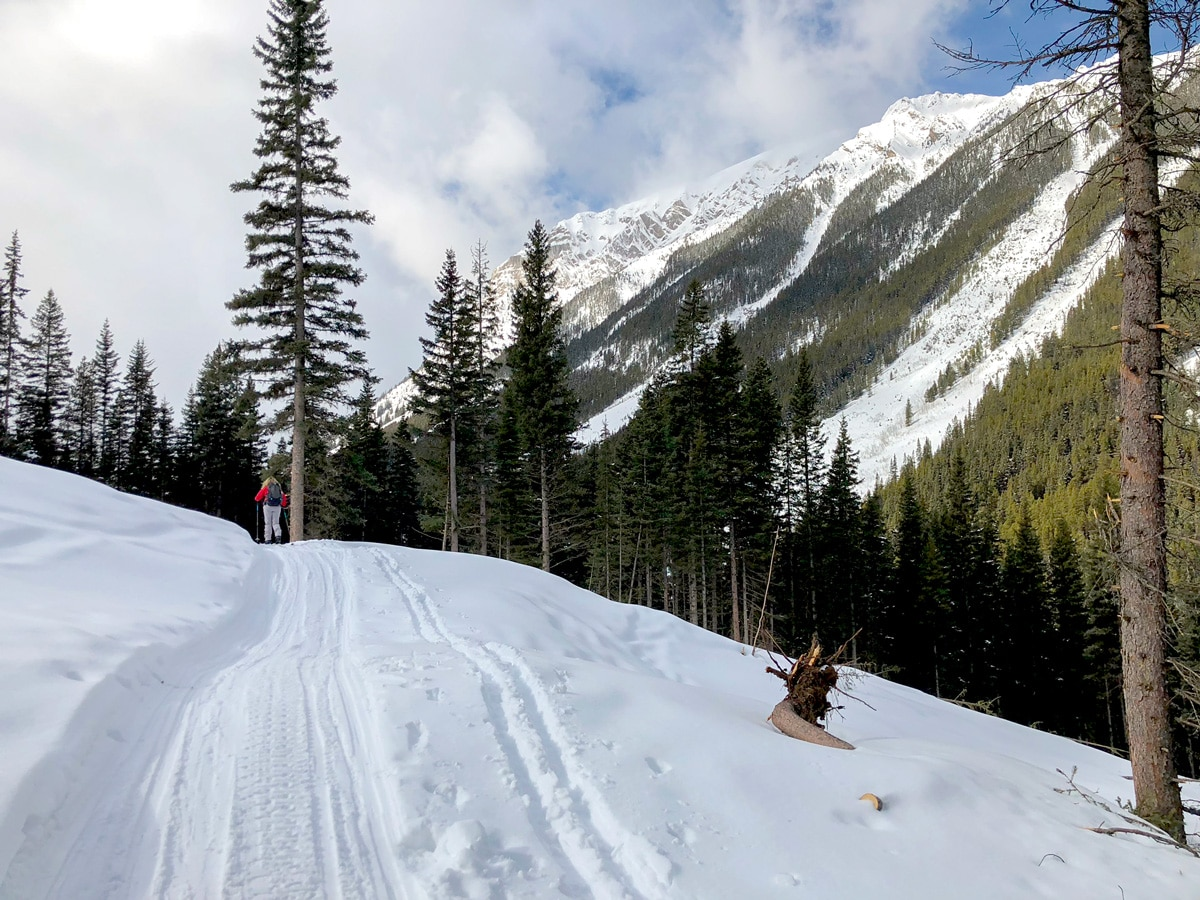Avalanche zone on Redearth Creek XC ski trail from Lake Louise, Banff National Park, Alberta