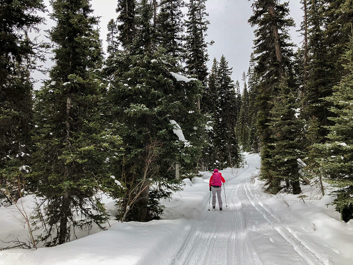 Heavy snow on Redearth Creek XC ski trail from Lake Louise, Banff National Park, Alberta