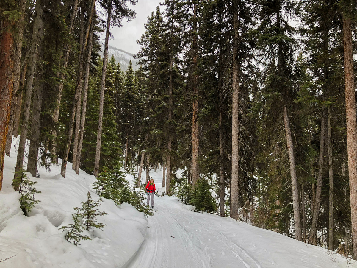 Skiing through the woods on Redearth Creek XC ski trail from Lake Louise, Banff National Park, Alberta