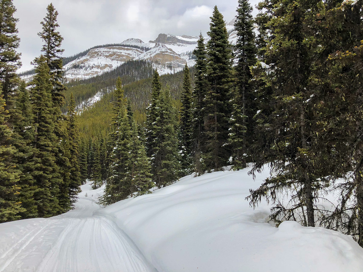 Track of Redearth Creek XC ski trail from Lake Louise, Banff National Park, Alberta