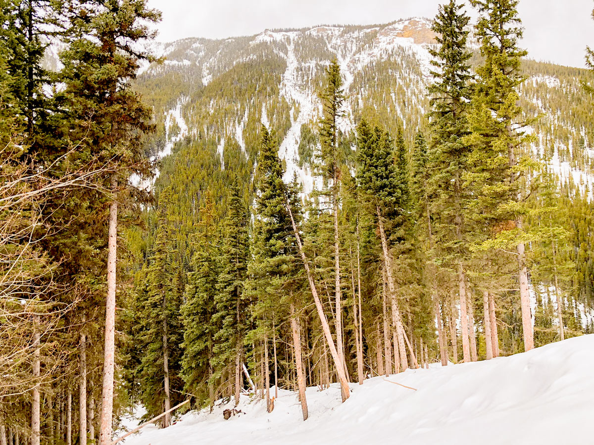 Avalanche zone views on Redearth Creek XC ski trail from Lake Louise, Banff National Park, Alberta
