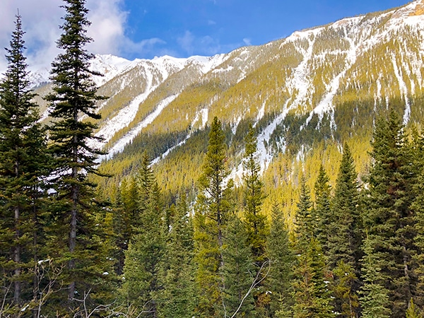 Scenery of Redearth Creek XC ski trail in Banff National Park, Alberta