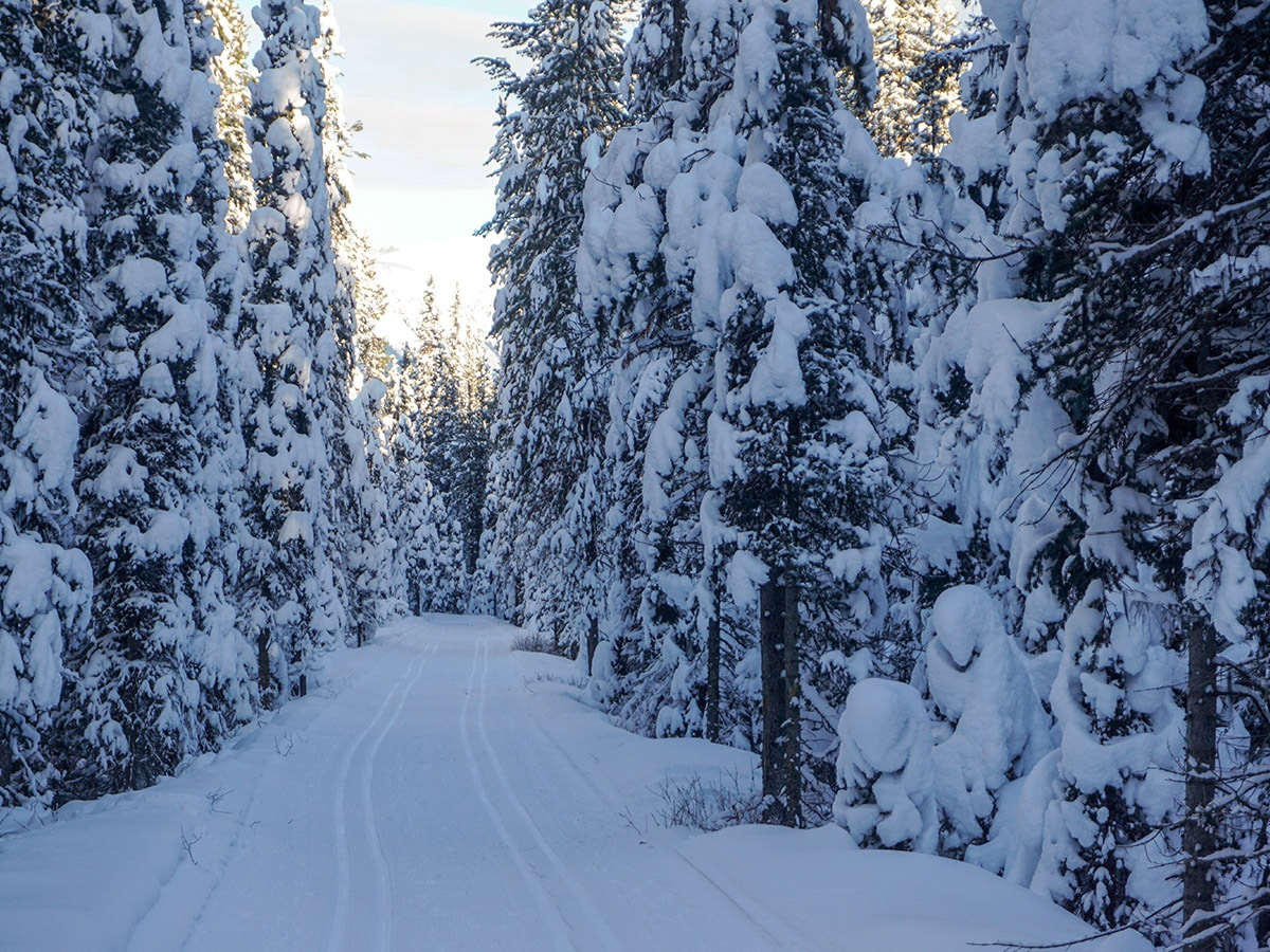 Shaded path of Chateau to Village on Tramline and Bow River XC ski trail in Lake Louise, Banff National Park