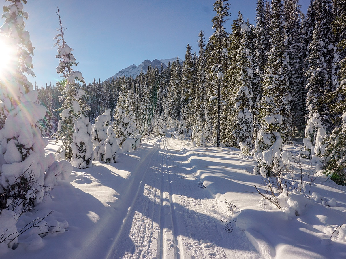 XC Skiing along the Bow River Loop in Lake Louise January