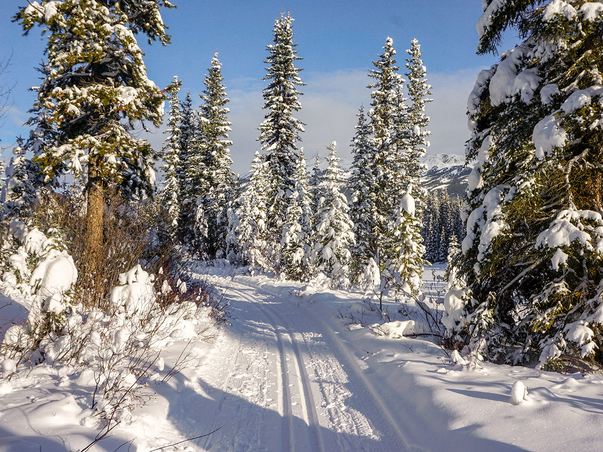 Fun path of Chateau to Village on Tramline and Bow River XC ski trail in Lake Louise, Banff National Park