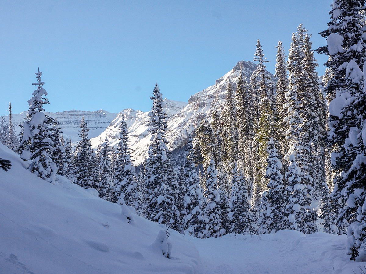 Nice scenery on Chateau to Village on Tramline and Bow River XC ski trail in Lake Louise, Banff National Park