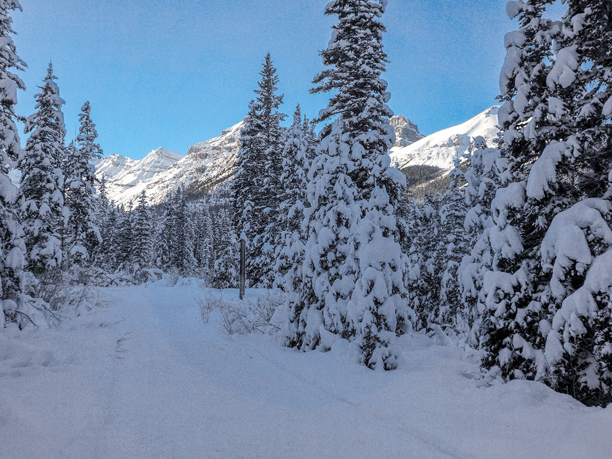 Path through the woods on Chateau to Village on Tramline and Bow River XC ski trail in Lake Louise, Banff National Park