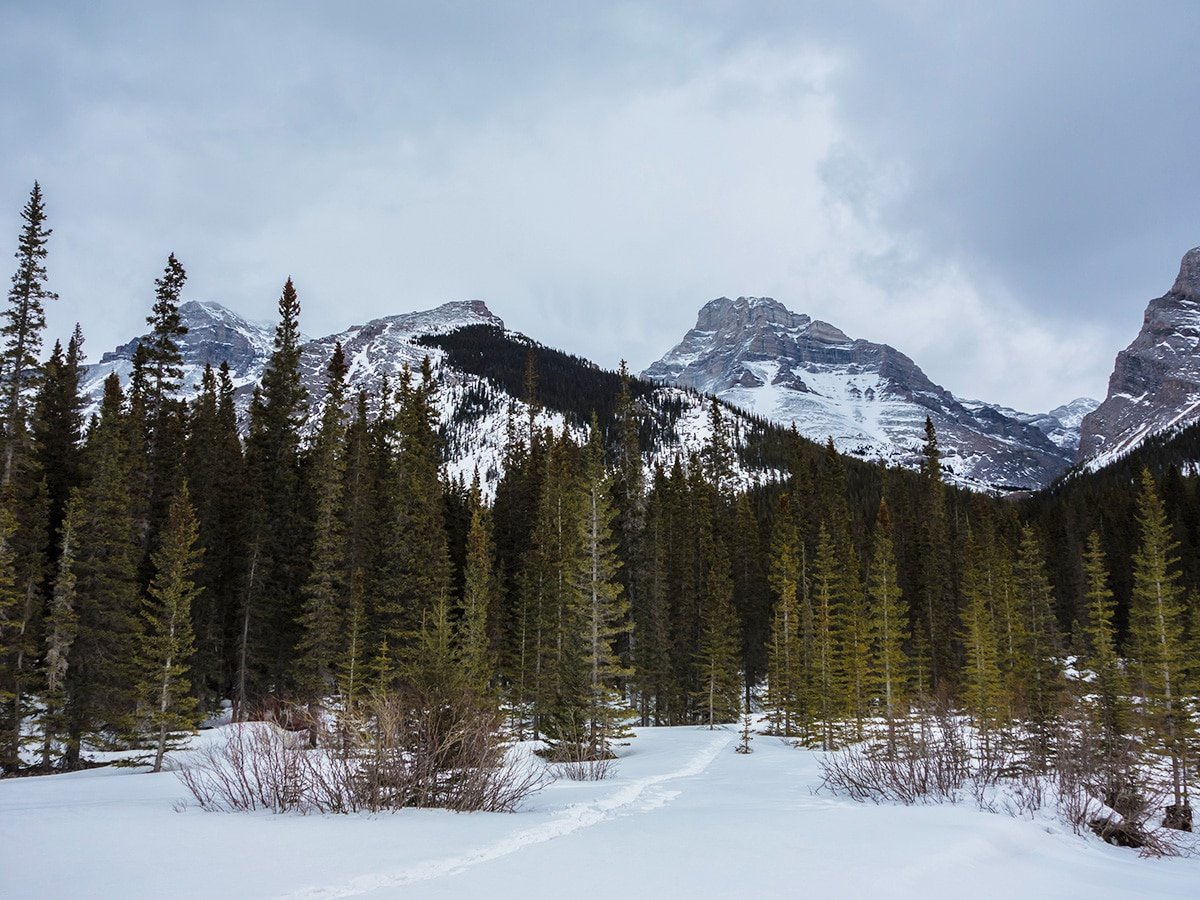 View from the road on Little Lougheed snowshoe trail in Kananaskis near Canmore
