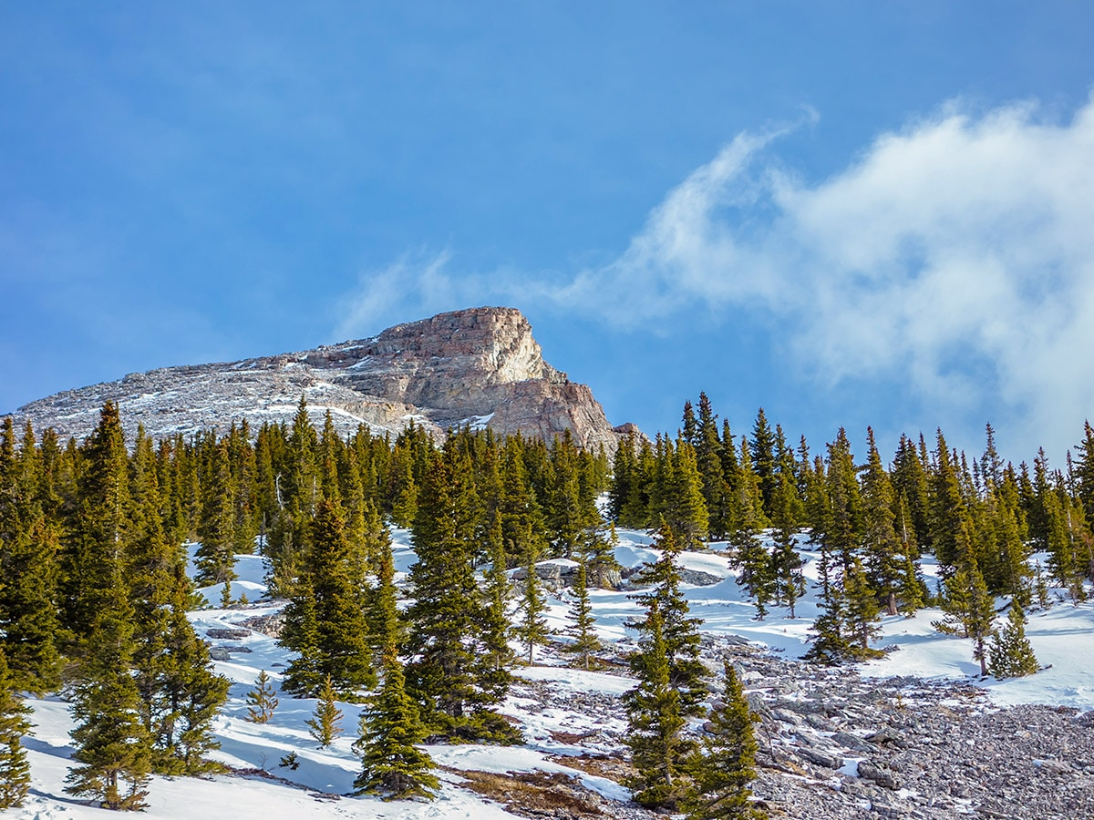 Near the summit on Little Lougheed snowshoe trail in Kananaskis near Canmore
