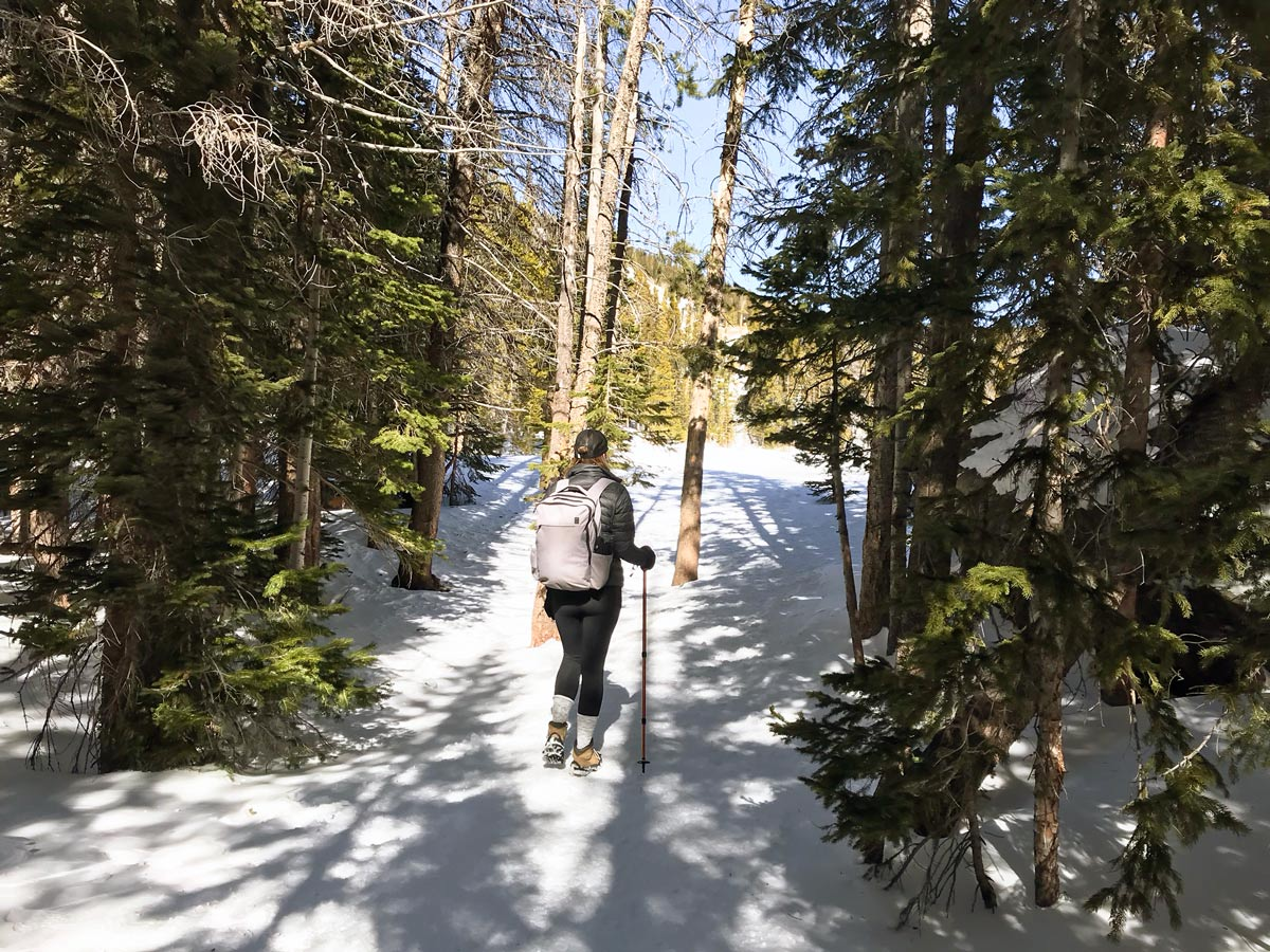Snowy path of Nymph Lake snowshoe trail in Rocky Mountain National Park, Colorado