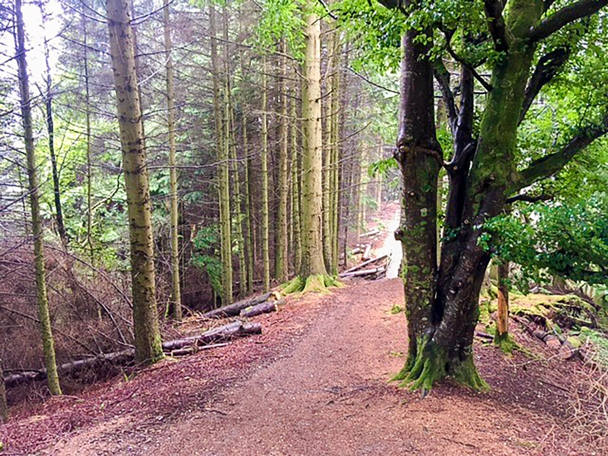 Woodland on the upper part of Callander Crags hike in Loch Lomond and The Trossachs region in Scotland