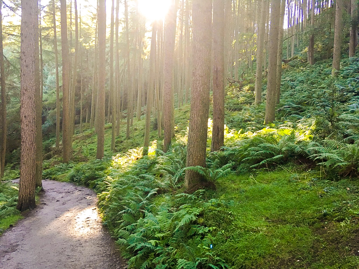 Ancient forest trail on Conic Hill hike in Loch Lomond and The Trossachs region in Scotland
