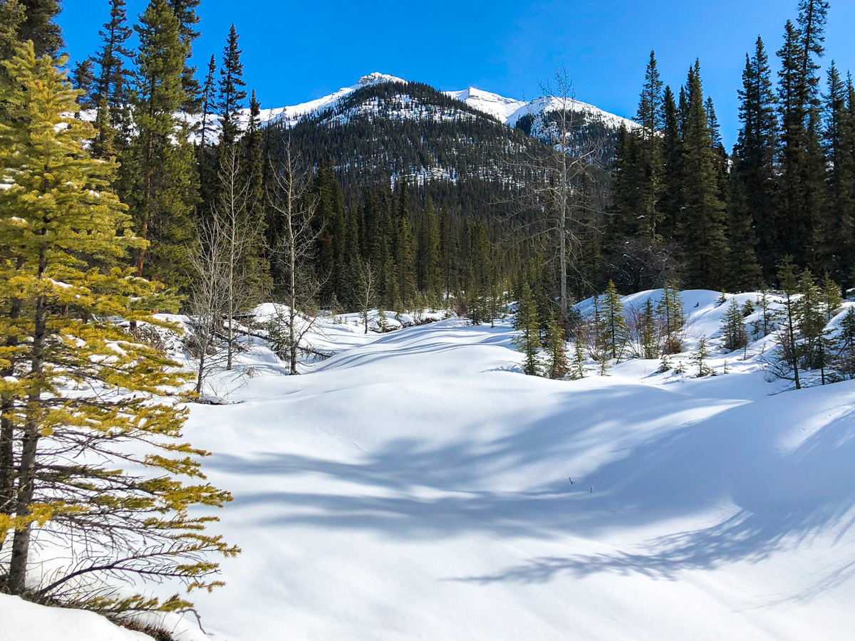 Beautiful snow on Goat Creek to Banff Springs XC ski trail in Canmore and Banff National Park