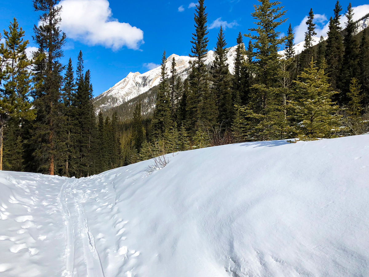 Fresh snow on Goat Creek to Banff Springs XC ski trail in Canmore and Banff National Park