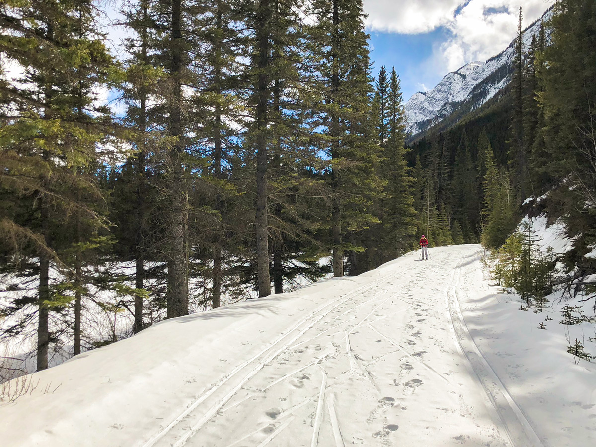 Skiing along Spray River on Goat Creek to Banff Springs XC ski trail in Canmore and Banff National Park