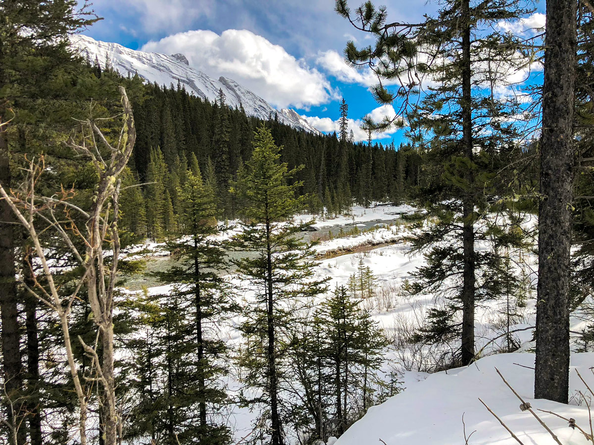Spray River Valley views on Goat Creek to Banff Springs XC ski trail in Canmore and Banff National Park