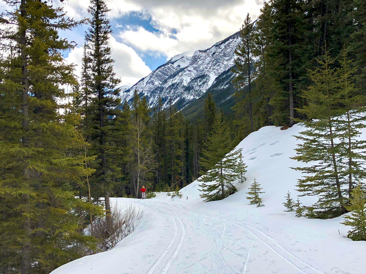 Beautiful skiing path on Goat Creek to Banff Springs XC ski trail in Canmore and Banff National Park