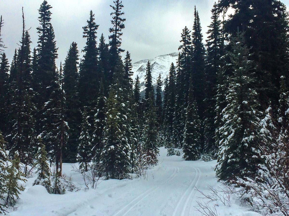 Snowy day on Elk Pass XC ski trail near Kananaskis and Canmore