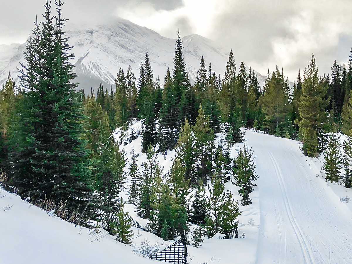 Beautiful path of Mt Shark XC ski trail near Kananaskis and Canmore in the Canadian Rockies