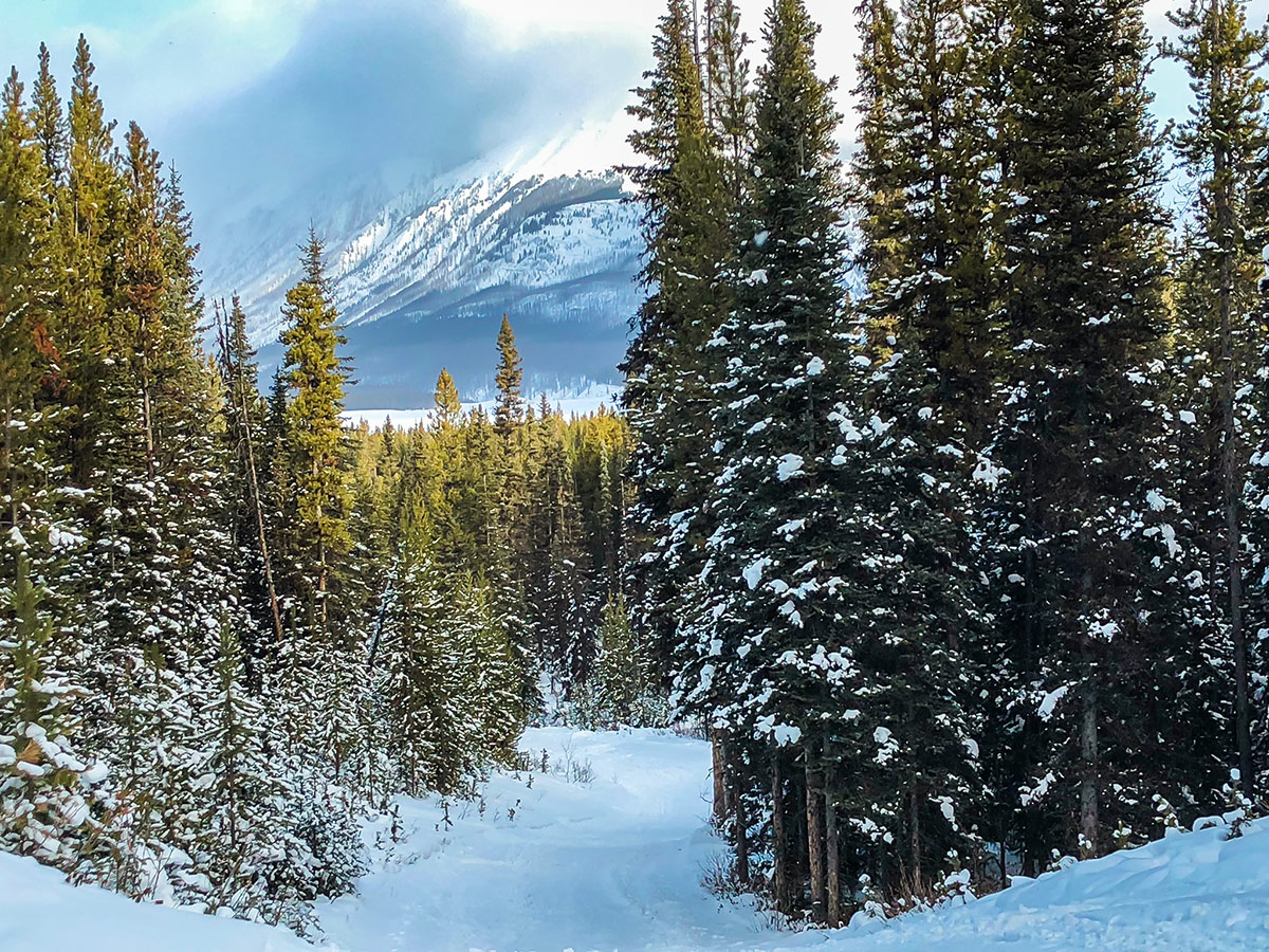 Beautiful scenery on Mt Shark XC ski trail near Kananaskis and Canmore in the Canadian Rockies