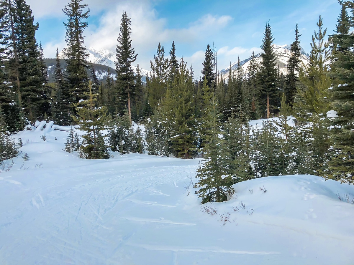 Snowy path of Mt Shark XC ski trail near Kananaskis and Canmore in the Canadian Rockies