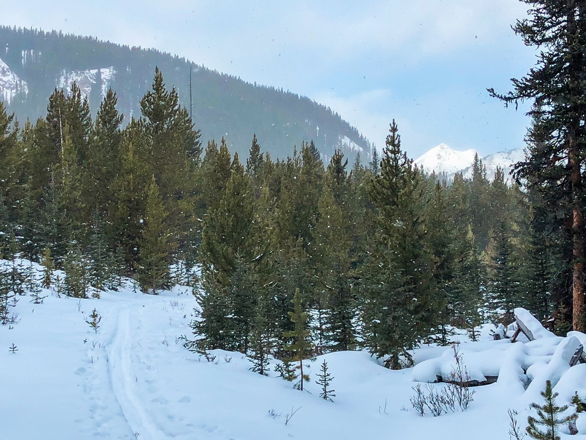 Heavy snow on Mt Shark XC ski trail near Kananaskis and Canmore in the Canadian Rockies
