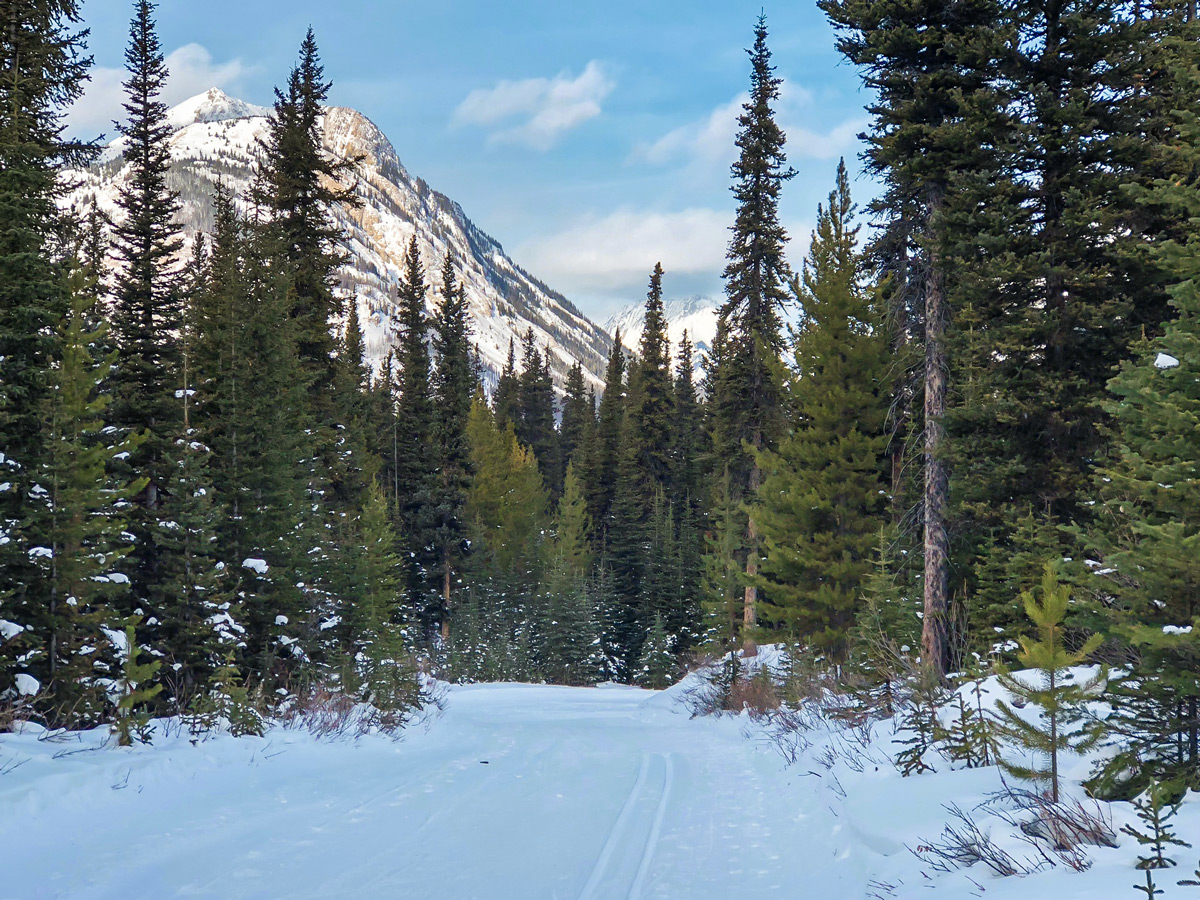 Great scenery on Mt Shark XC ski trail near Kananaskis and Canmore in the Canadian Rockies