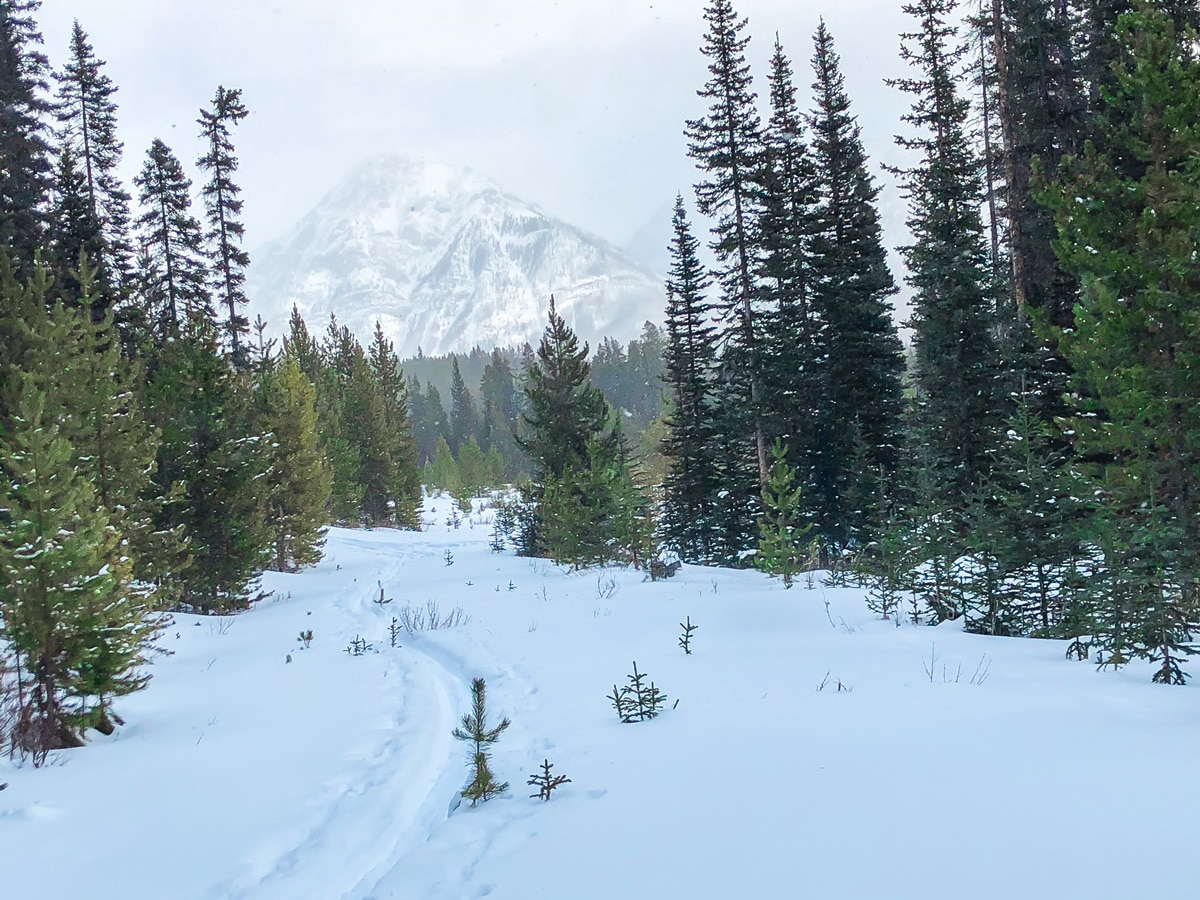 Cloudy day on Mt Shark XC ski trail near Kananaskis and Canmore in the Canadian Rockies