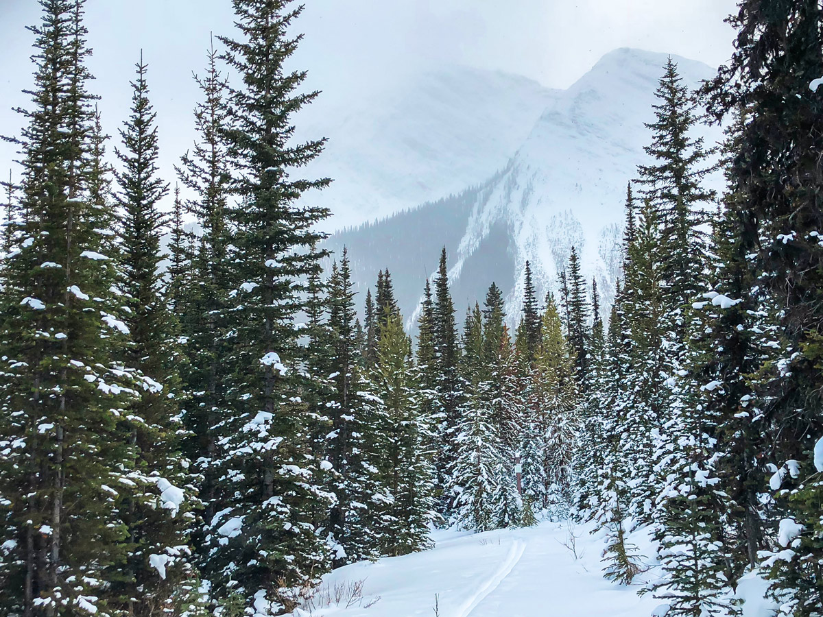 Snowing on Mt Shark XC ski trail near Kananaskis and Canmore in the Canadian Rockies