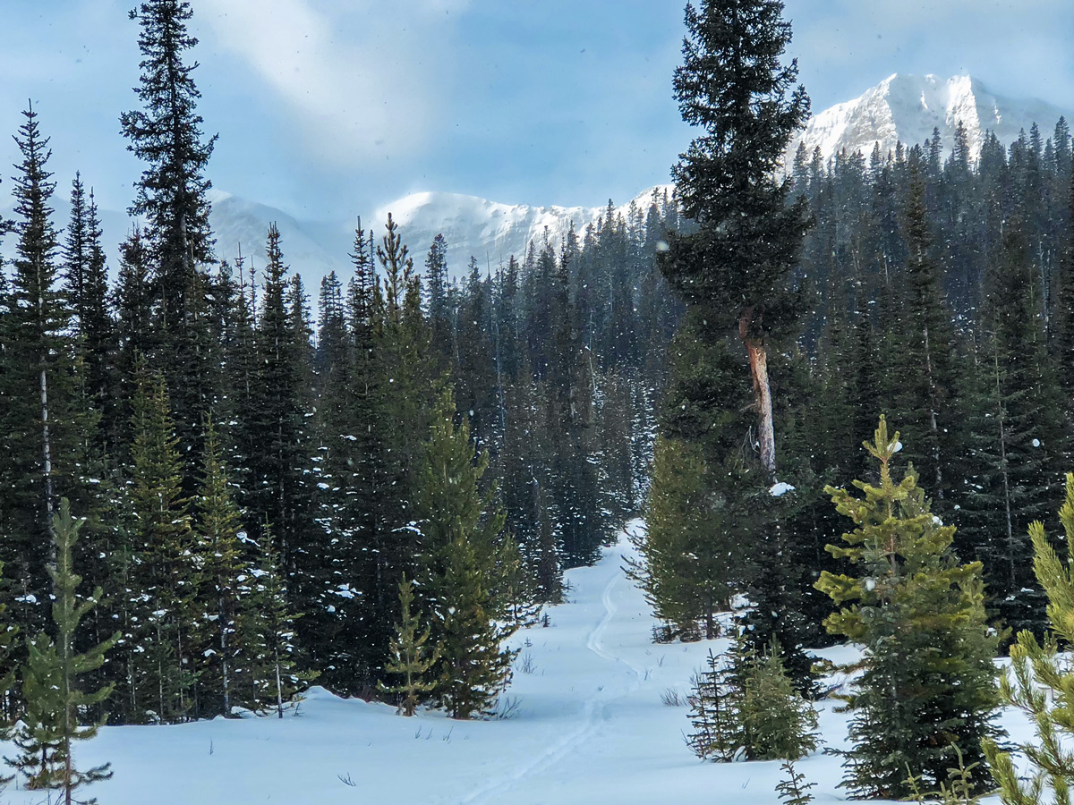 Path through the forest on Mt Shark XC ski trail near Kananaskis and Canmore in the Canadian Rockies