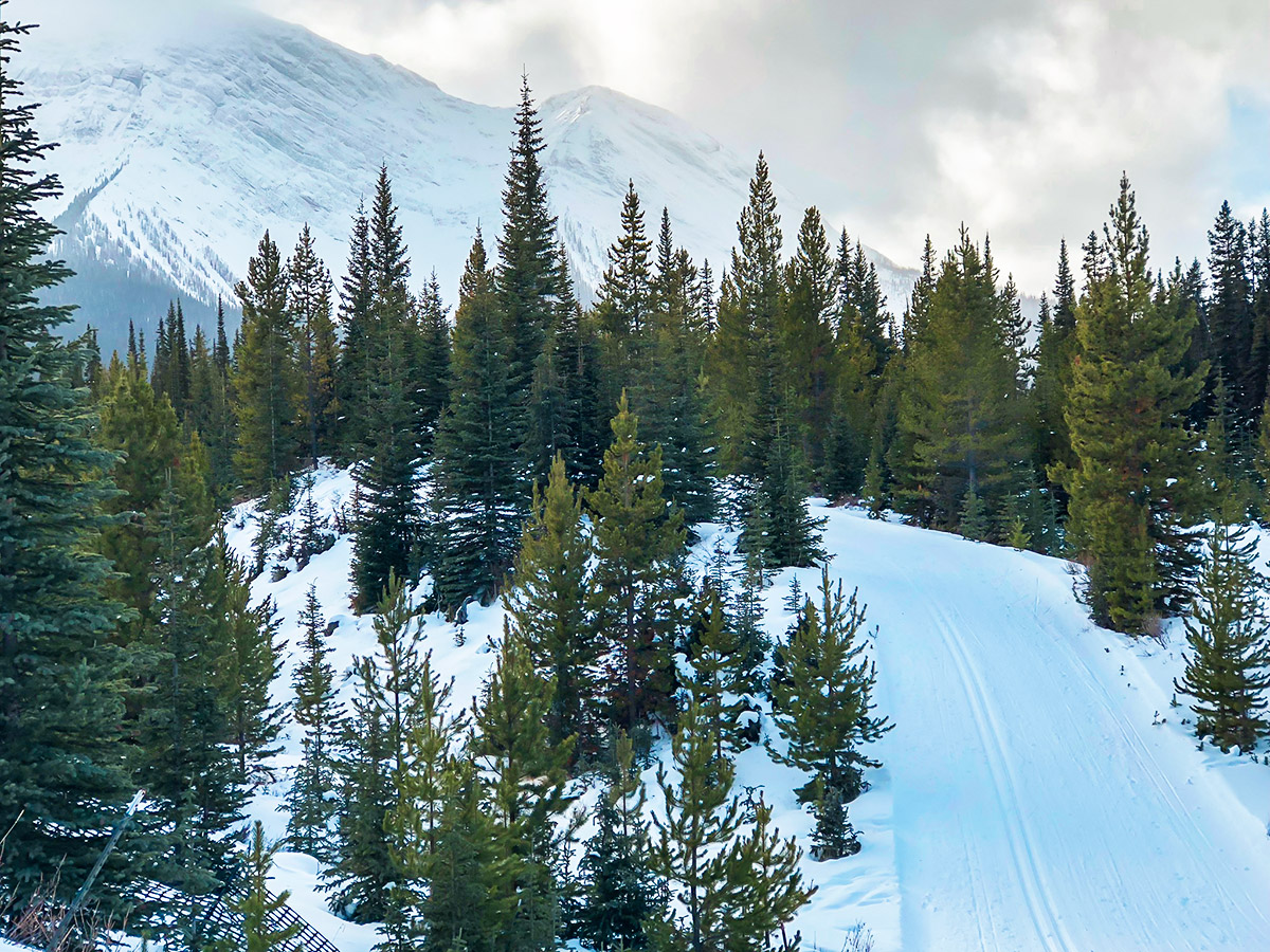 Beautiful winter scenery on Mt Shark XC ski trail near Kananaskis and Canmore in the Canadian Rockies